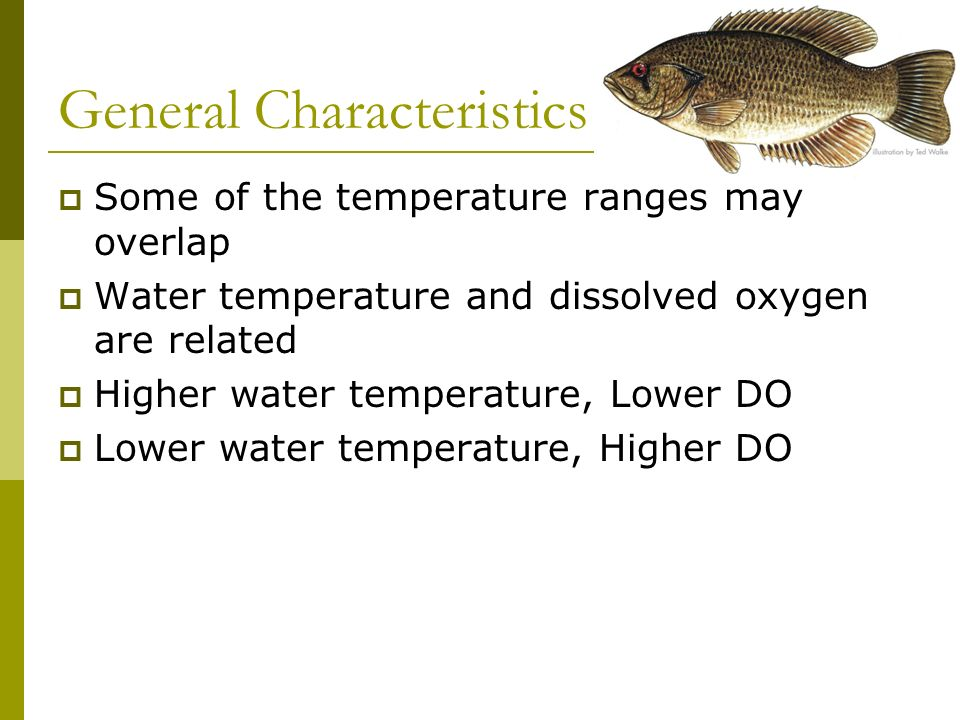General Characteristics Ectothermic: temperature of surroundings affects internal temperature and functions Temperature of water is the main determina