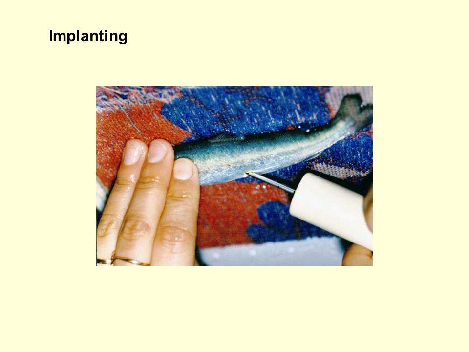 Implanting