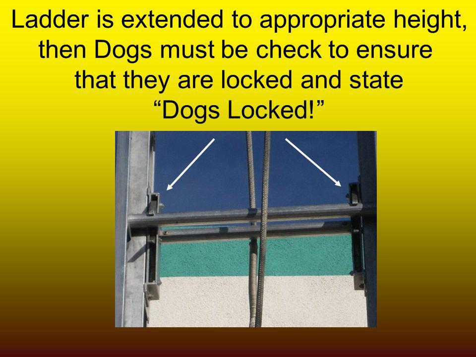 Ladder is extended to appropriate height, then Dogs must be check to ensure that they are locked and state Dogs Locked!