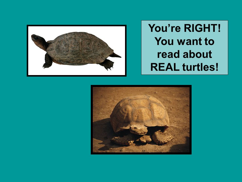 Think about the purpose for your book. To write a report on turtles would you read … or
