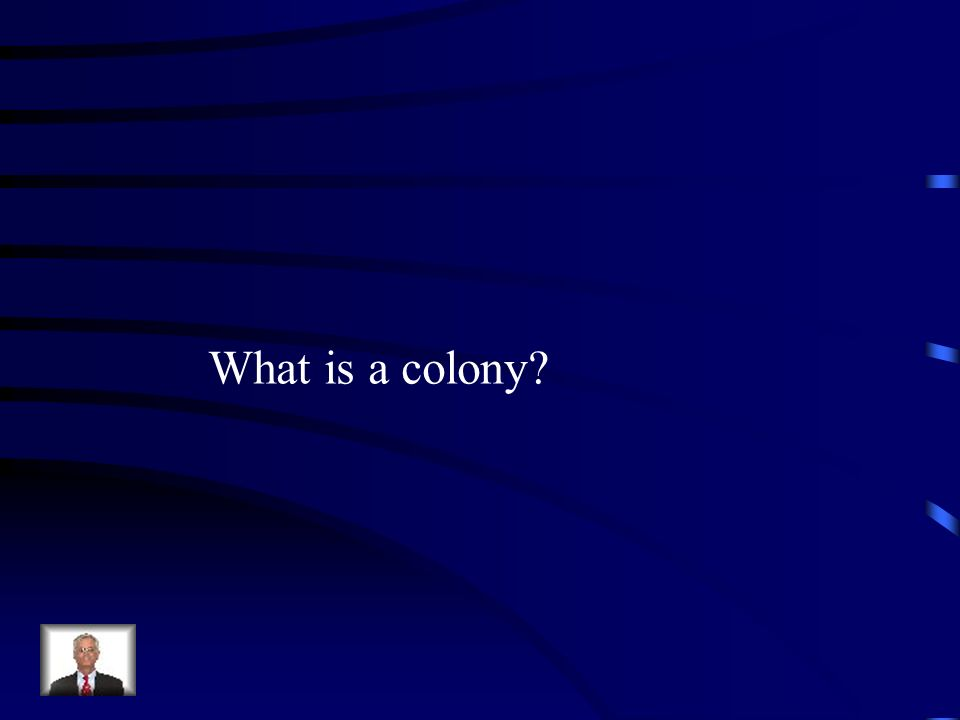 What is a colony?