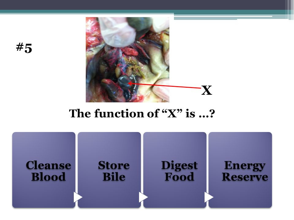 Cleanse Blood Store Bile Digest Food Energy Reserve The function of X is …? #5 X
