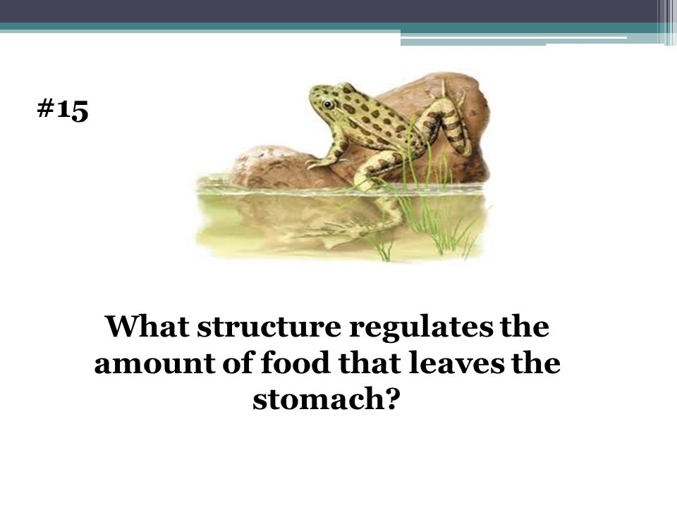 What structure regulates the amount of food that leaves the stomach? #15