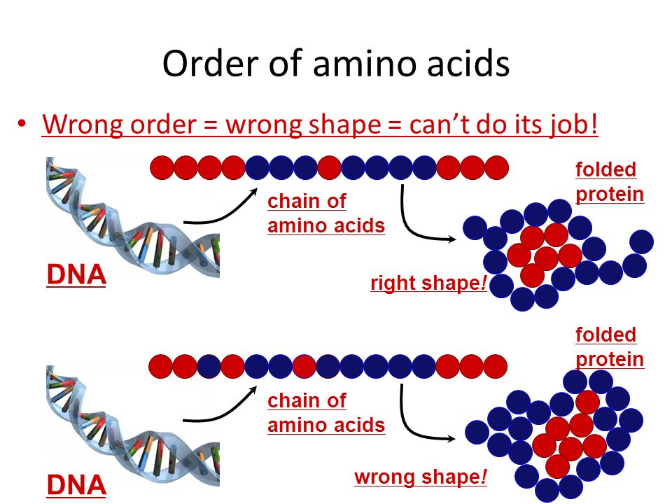 What affects enzyme action Correct protein structure – correct order of amino acids – why? enzyme has to be right shape Temperature – why? enzyme has