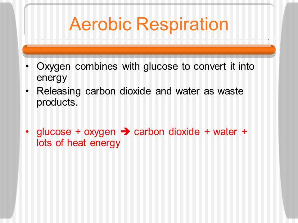 GLYCOLYSIS KREBS CYCLE Insert 1 Glucose 2 energy tokens (ATP) 2 energy tokens 32 energy tokens ELECTRON TRANSPORT CHAIN - - - - - - - - reactants prod