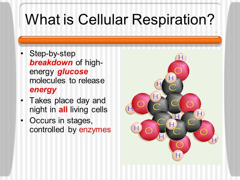 Cellular Respiration BIOLOGY
