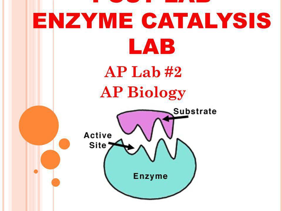 POST LAB ENZYME CATALYSIS LAB AP Lab #2 AP Biology