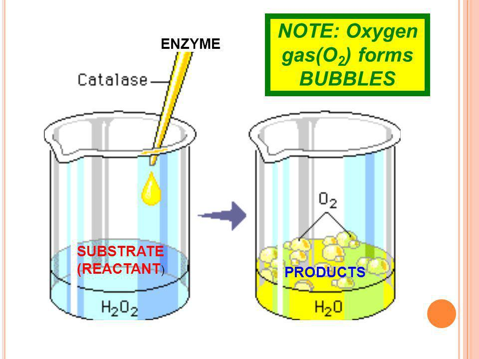 ENZYME SUBSTRATE (REACTANT ) PRODUCTS NOTE: Oxygen gas(O 2 ) forms BUBBLES