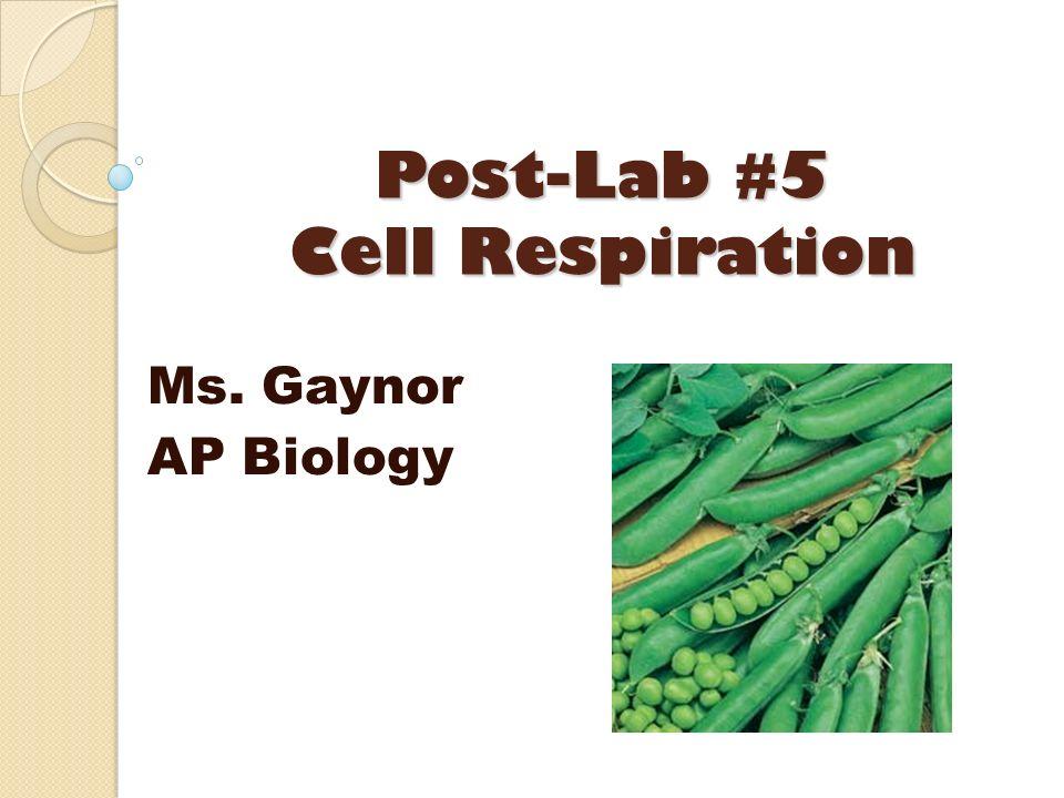 Post-Lab #5 Cell Respiration Ms. Gaynor AP Biology