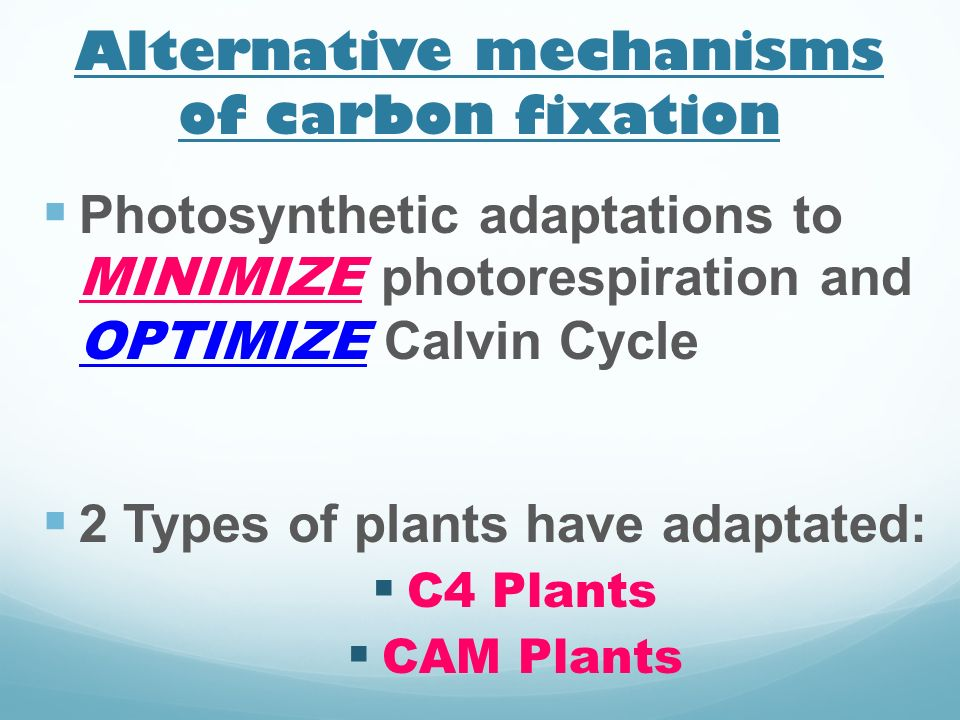 Alternative mechanisms of carbon fixation Photosynthetic adaptations to MINIMIZE photorespiration and OPTIMIZE Calvin Cycle 2 Types of plants have ada