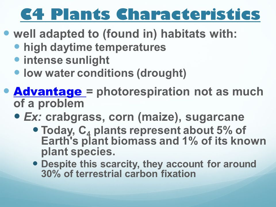 C4 Plants Characteristics well adapted to (found in) habitats with: high daytime temperatures intense sunlight low water conditions (drought) Advantag