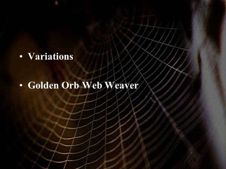 Variations Golden Orb Web Weaver