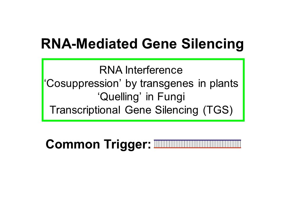 RNA-Mediated Gene Silencing RNA Interference Cosuppression by transgenes in plants Quelling in Fungi Transcriptional Gene Silencing (TGS) Common Trigg
