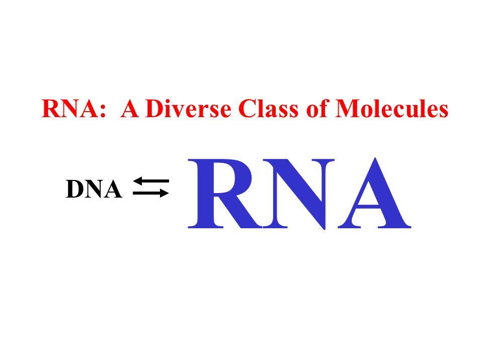 RNA: A Diverse Class of Molecules RNA DNA