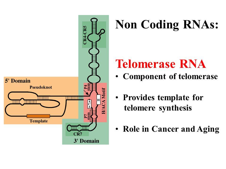 RNA-Mediated Gene Silencing Post-transcriptional Gene Silencing (PTGS) or RNA Interference (RNAi) Transcriptional Gene Silencing (TGS) (RNA-dependent DNA Methylation) Gene Silencing By MicroRNAs