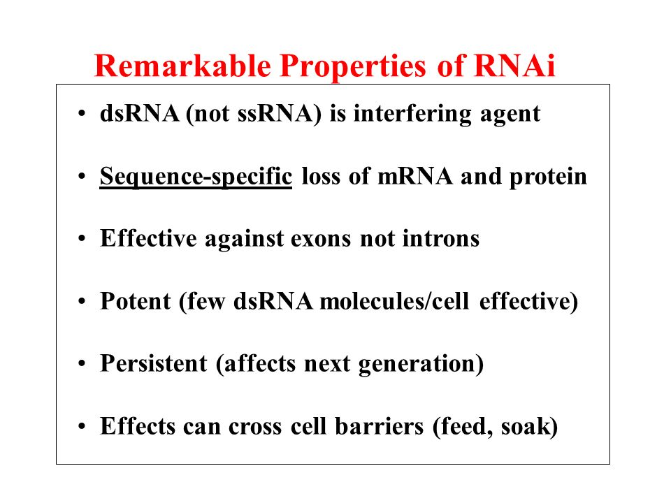 Remarkable Properties of RNAi dsRNA (not ssRNA) is interfering agent Sequence-specific loss of mRNA and protein Effective against exons not introns Po