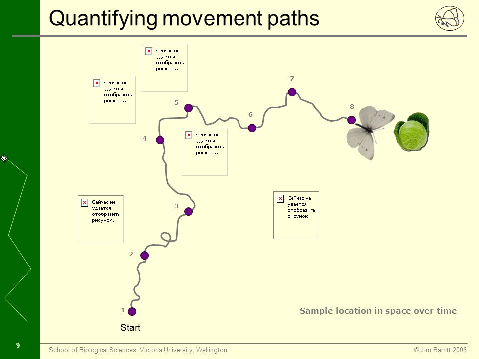 © Jim Barritt 2006School of Biological Sciences, Victoria University, Wellington 8 Quantifying movement paths Start Animal moves continuously in space