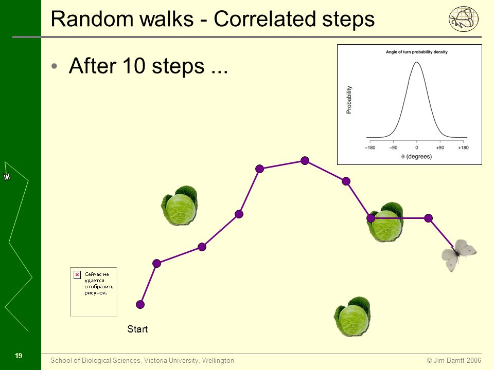 © Jim Barritt 2006School of Biological Sciences, Victoria University, Wellington 18 Random walks - correlated steps We can simulate correlation of angle of turn by selecting θ from a probability distribution...