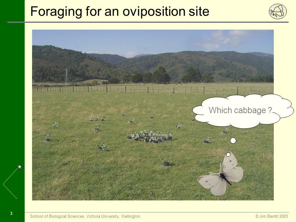 © Jim Barritt 2005School of Biological Sciences, Victoria University, Wellington 33