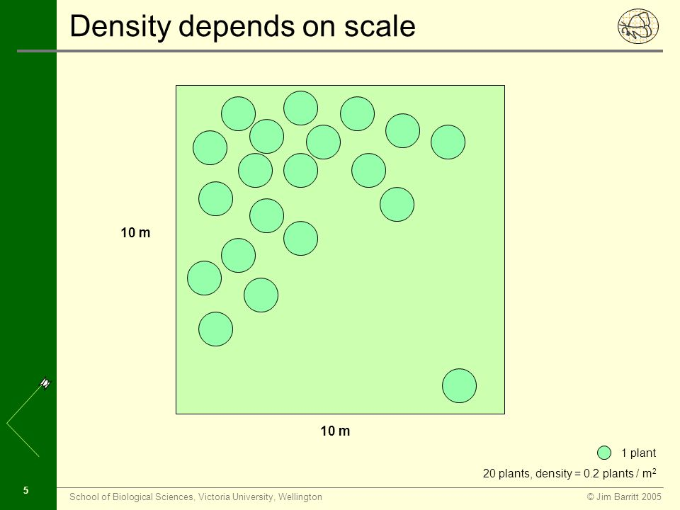 © Jim Barritt 2005School of Biological Sciences, Victoria University, Wellington 5 Density depends on scale 10 m 1 plant 20 plants, density = 0.2 plants / m 2