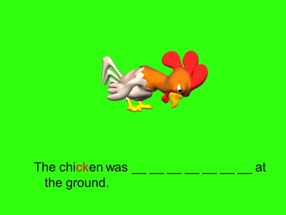 The chicken was __ __ __ __ __ __ __ at the ground.