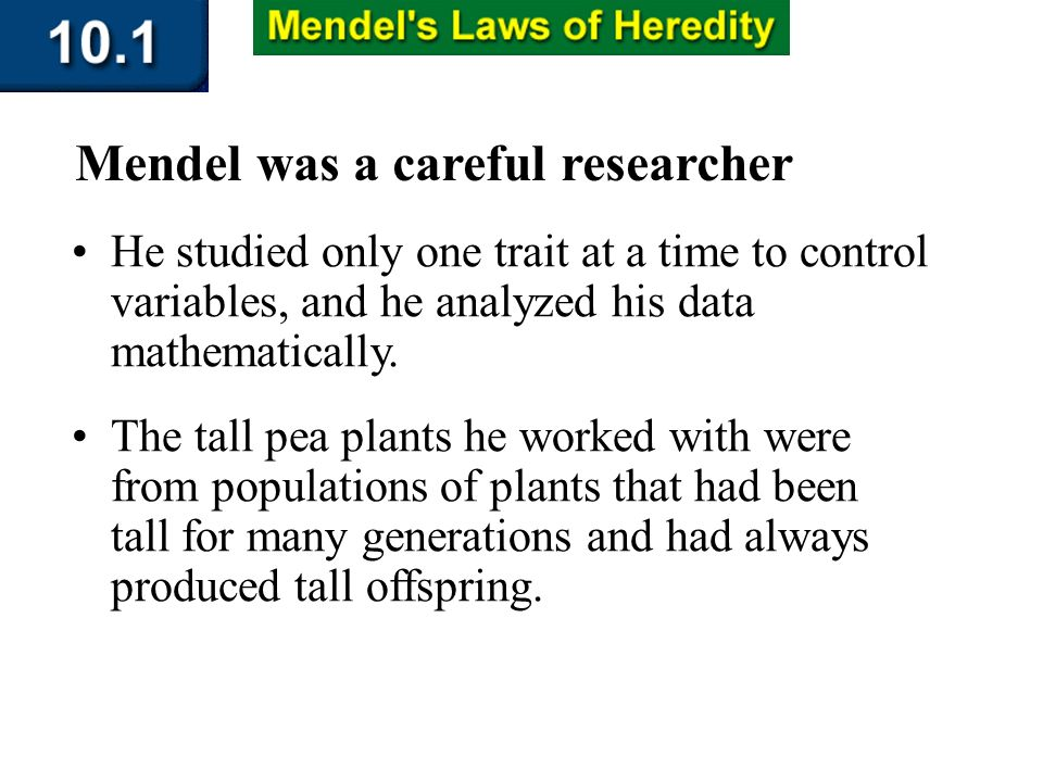 Section 10.1 Summary – pages 253-262 He studied only one trait at a time to control variables, and he analyzed his data mathematically. Mendel was a c