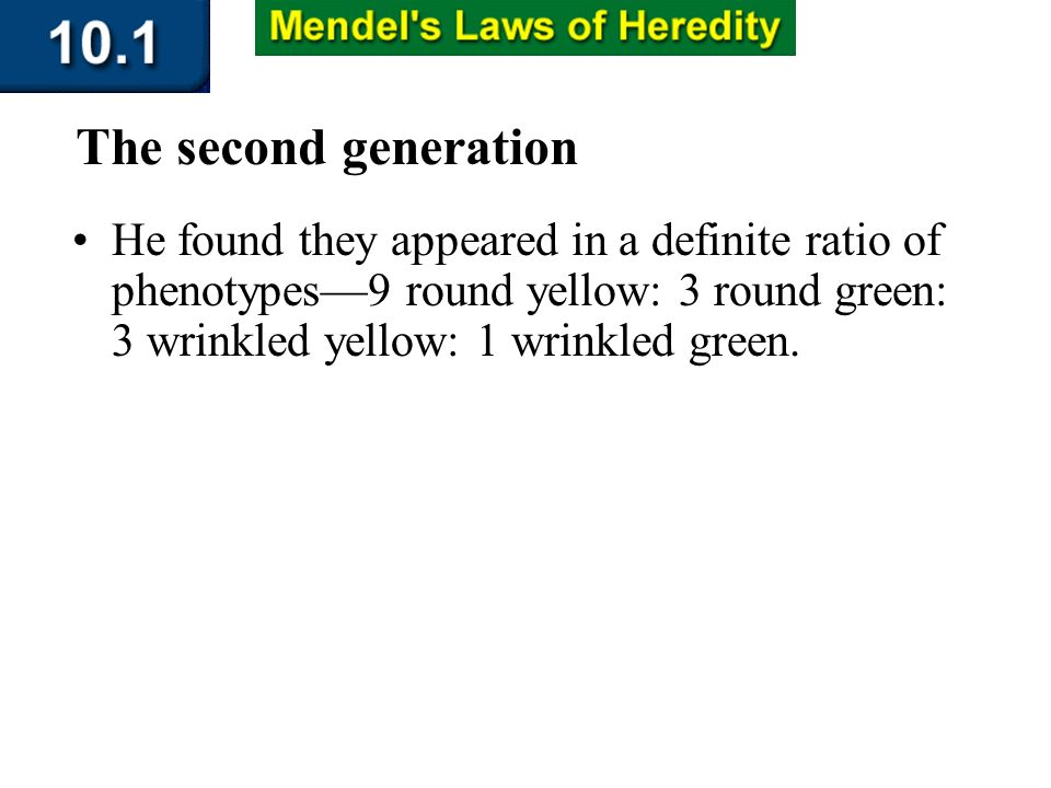 Section 10.1 Summary – pages 253-262 He found they appeared in a definite ratio of phenotypes9 round yellow: 3 round green: 3 wrinkled yellow: 1 wrink