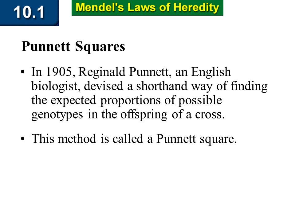 Section 10.1 Summary – pages 253-262 In 1905, Reginald Punnett, an English biologist, devised a shorthand way of finding the expected proportions of p