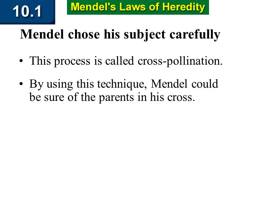 Section 10.1 Summary – pages 253-262 This process is called cross-pollination. By using this technique, Mendel could be sure of the parents in his cro