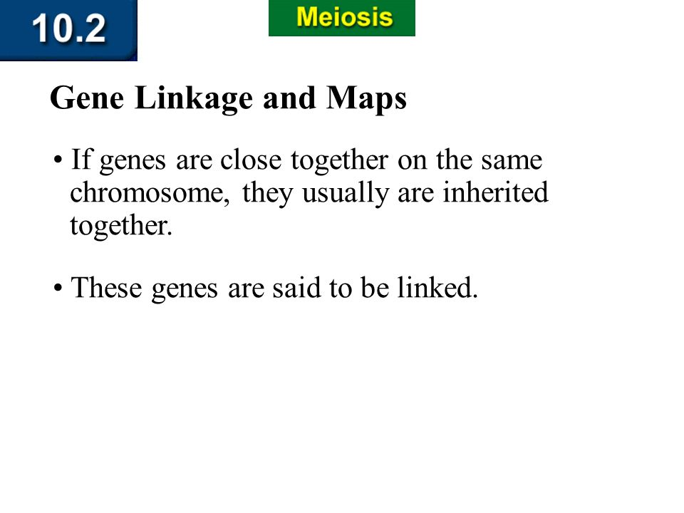 Section 10.2 Summary – pages 263-273 If genes are close together on the same chromosome, they usually are inherited together. Gene Linkage and Maps Th