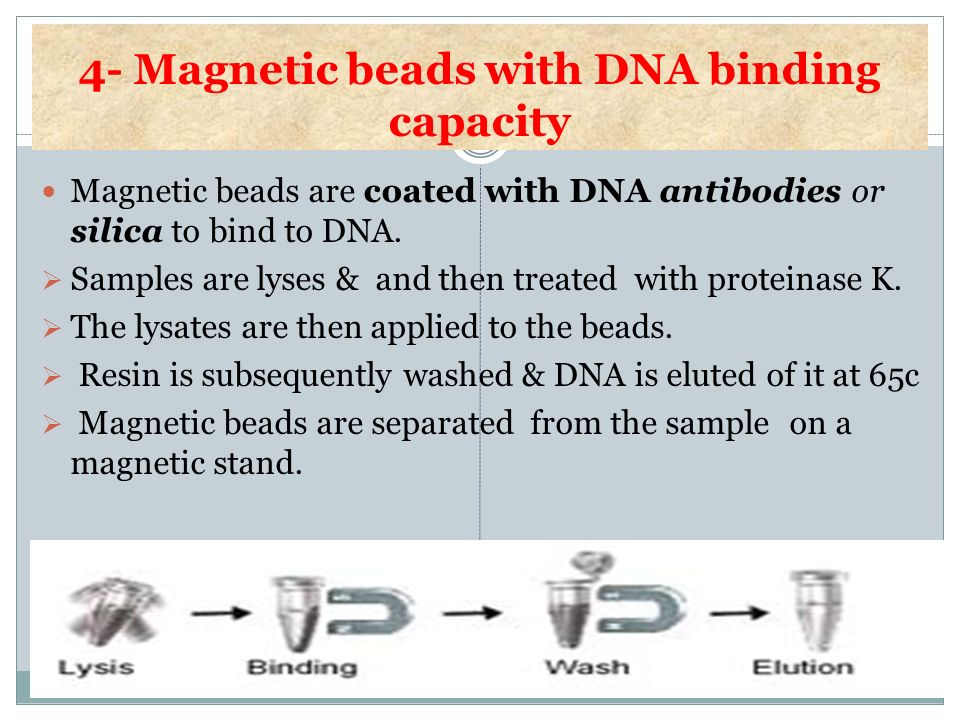 4- Magnetic beads with DNA binding capacity Magnetic beads are coated with DNA antibodies or silica to bind to DNA. Samples are lyses & and then treat