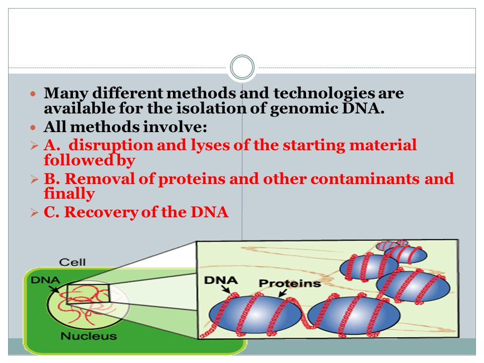 Many different methods and technologies are available for the isolation of genomic DNA. All methods involve: A. disruption and lyses of the starting m