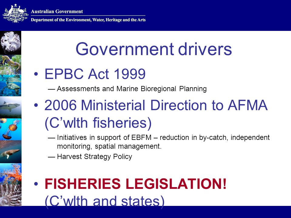 Government drivers EPBC Act 1999 Assessments and Marine Bioregional Planning 2006 Ministerial Direction to AFMA (Cwlth fisheries) Initiatives in support of EBFM – reduction in by-catch, independent monitoring, spatial management.