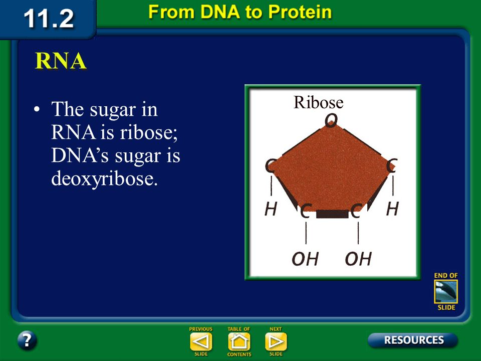 Section 11.2 Summary – pages 288 - 295 RNA like DNA, is a nucleic acid. RNA structure differs from DNA structure in three ways. First, RNA is single s