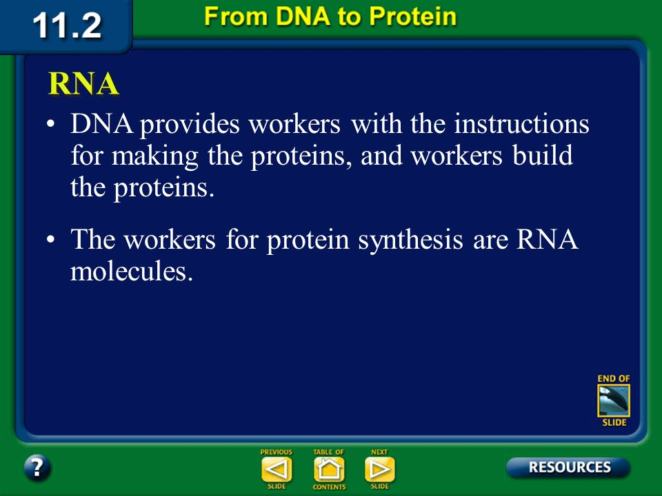 Section 11.2 Summary – pages 288 - 295 Both DNA and RNA contain four nitrogenous bases, but rather than thymine, RNA contains a similar base called uracil (U).