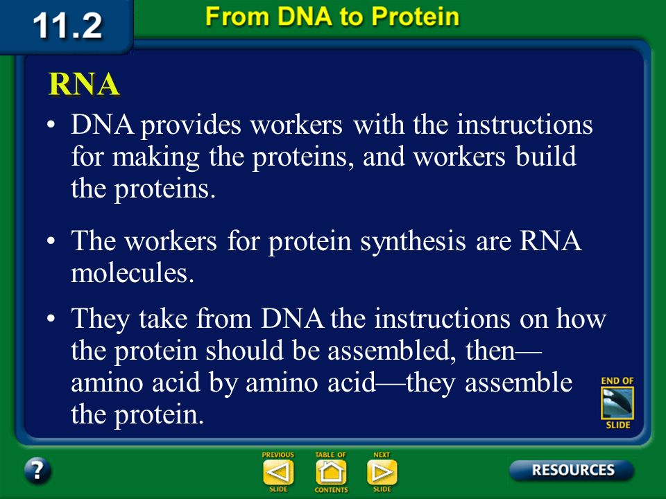 Section 11.2 Summary – pages 288 - 295 DNA provides workers with the instructions for making the proteins, and workers build the proteins.