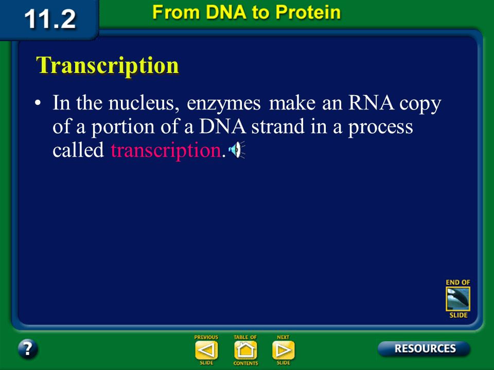 Section 11.2 Summary – pages 288 - 295 Transfer RNA (tRNA) is the supplier. Transfer RNA delivers amino acids to the ribosome to be assembled into a p