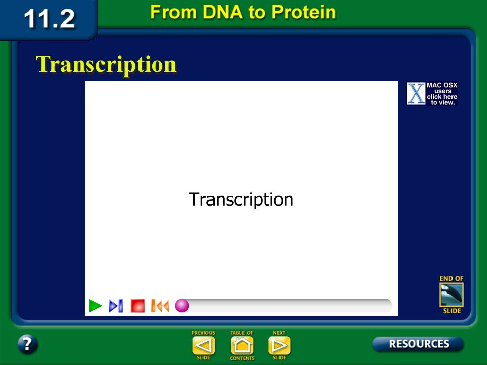 Section 11.2 Summary – pages 288 - 295 Transcription In the nucleus, enzymes make an RNA copy of a portion of a DNA strand in a process called transcription.