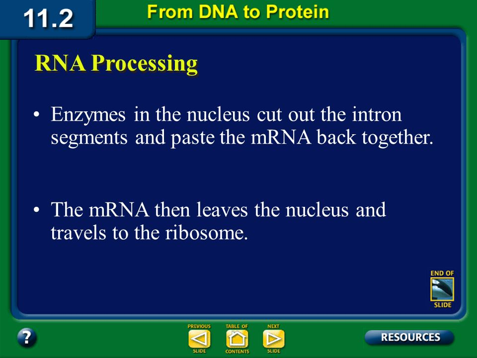 Section 11.2 Summary – pages 288 - 295 RNA Processing Regions that contain information are called exons because they are expressed. When mRNA is trans