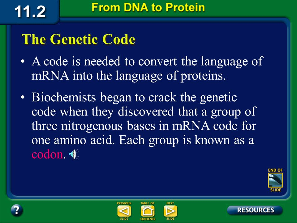 Section 11.2 Summary – pages 288 - 295 The nucleotide sequence transcribed from DNA to a strand of messenger RNA acts as a genetic message, the comple