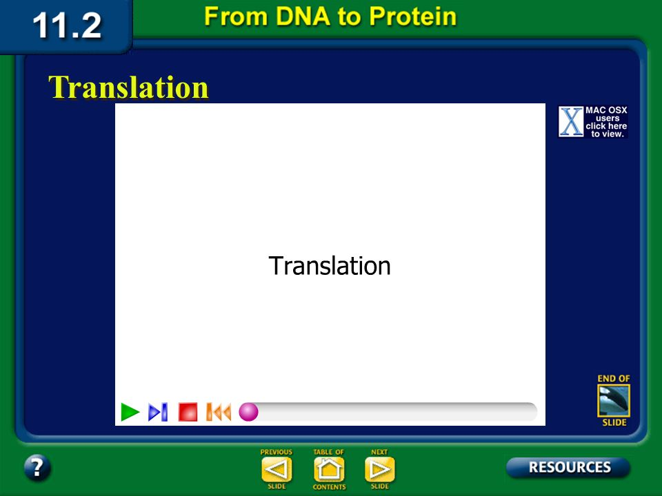 Section 11.2 Summary – pages 288 - 295 Each tRNA molecule attaches to only one type of amino acid. Amino acid Chain of RNA nucleotides Transfer RNA mo