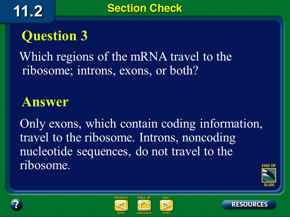 Section 2 Check What is the role of rRNA in protein synthesis? Question 2 Answer Ribosomal RNA binds to messenger RNA and assembles the amino acids in