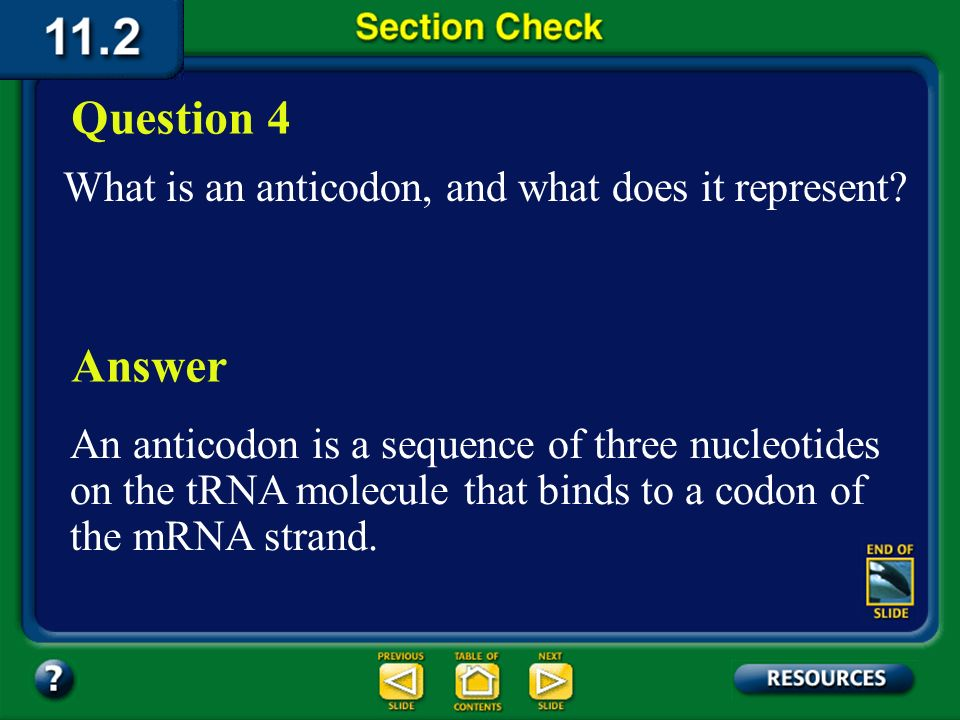 Section 2 Check Which regions of the mRNA travel to the ribosome; introns, exons, or both.