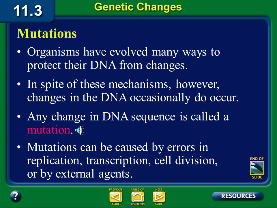 11.3 Section Objectives – page 296 Categorize the different kinds of mutations that can occur in DNA.