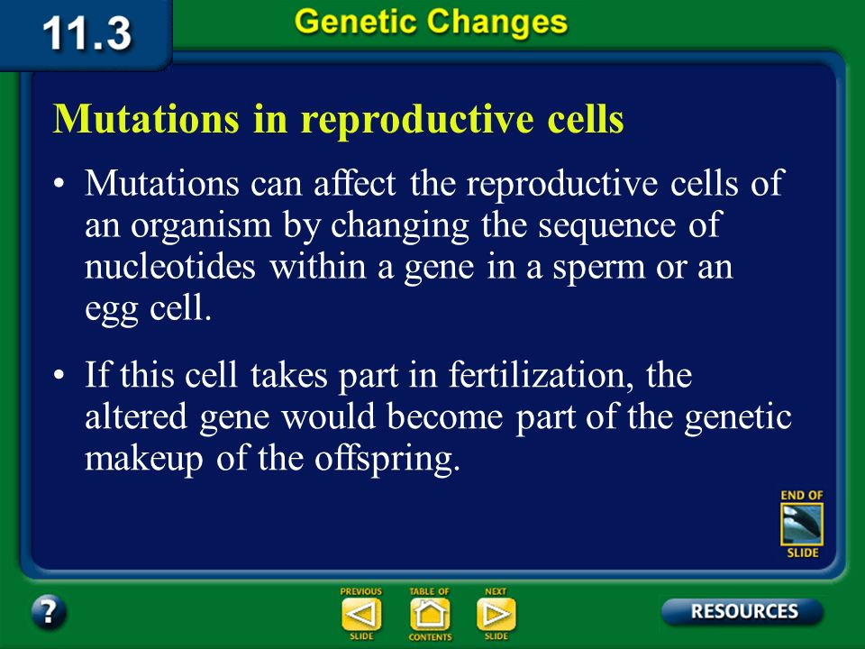 11.3 Section Summary 6.3 – pages 296 - 301 Organisms have evolved many ways to protect their DNA from changes. Mutations In spite of these mechanisms,