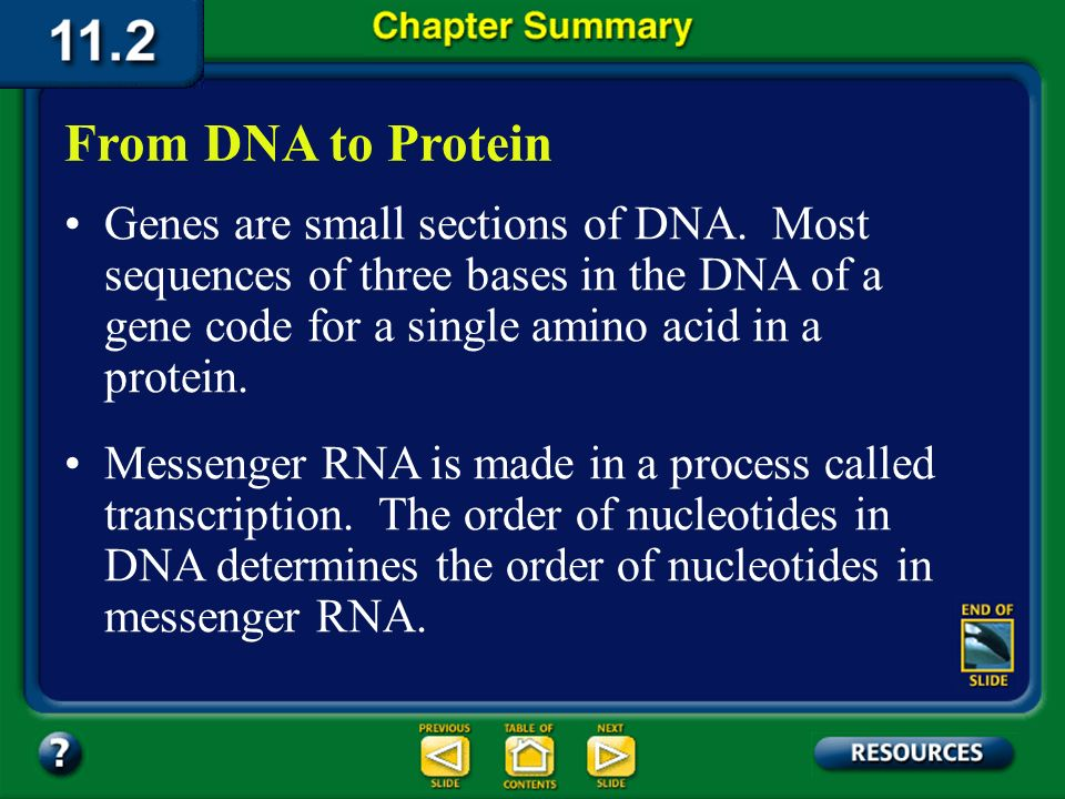 Chapter Summary – 11.1 DNA: The Molecule of Heredity DNA, the genetic material of organisms, is composed of four kinds of nucleotides. A DNA molecule