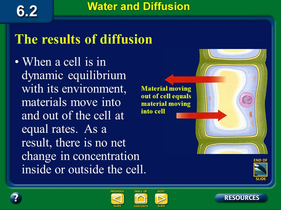 Summary Section 2 – pages 152-156 The process of diffusion Diffusion is the net movement of particles from an area of higher concentration to an area