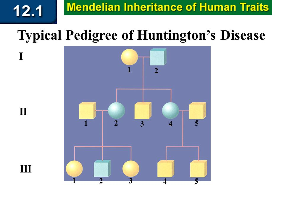 Section 12.1 Summary – pages 309 - 314 Typical Pedigree of Huntingtons Disease I 1 II III 2 1 1 3 2 2 4 3 45 5