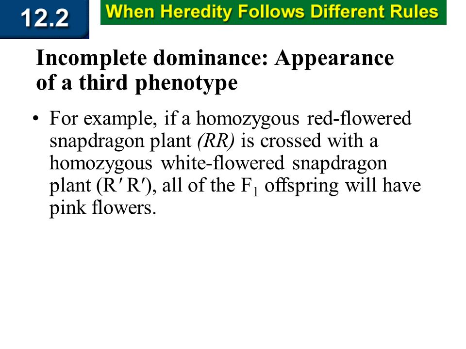 Section 12.2 Summary – pages 315 - 322 Incomplete dominance: Appearance of a third phenotype For example, if a homozygous red-flowered snapdragon plan