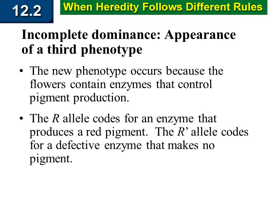 Section 12.2 Summary – pages 315 - 322 Incomplete dominance: Appearance of a third phenotype The new phenotype occurs because the flowers contain enzy